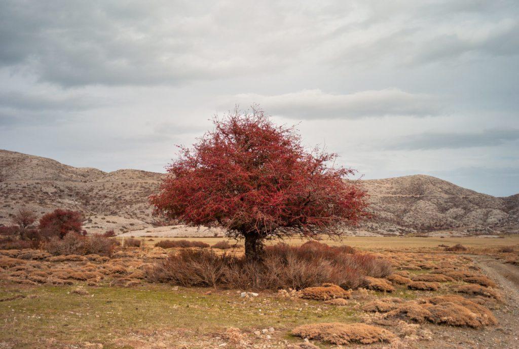 Albero rosso, vista dell'altopiano di Nida.