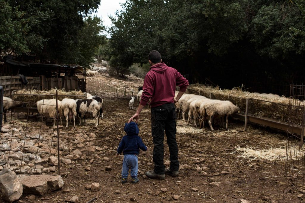 Kostis at his barn next to the village, with his one-year-old son son Agisilaos.