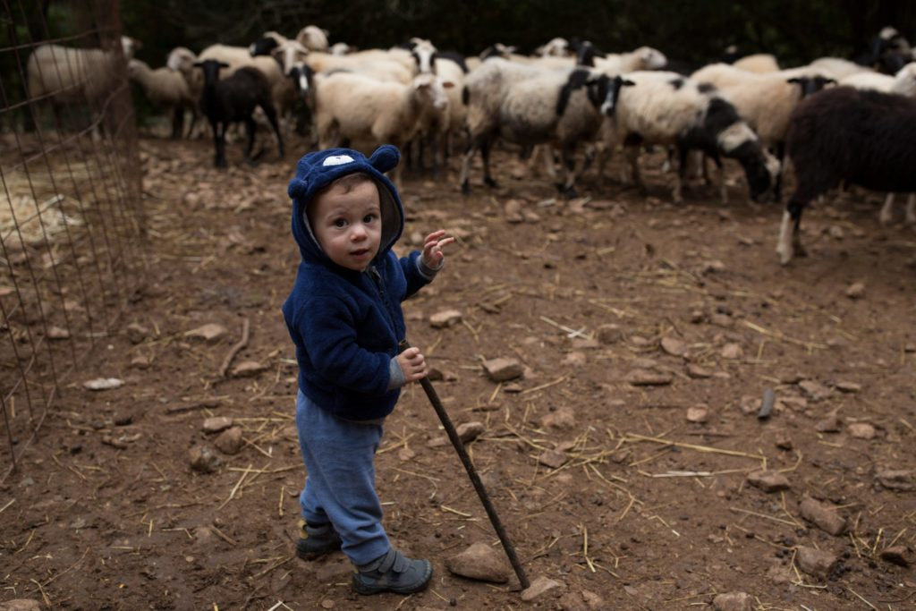 Agisilaos is Kostis and Iro's youngest son. He's used to being in the barn with his parents, close to the sheep.